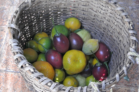 Fruits harvested at Hacienda Verde